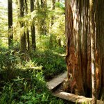 tofino hotels near the rainforest trail